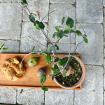 Objects & Use garden styling 012